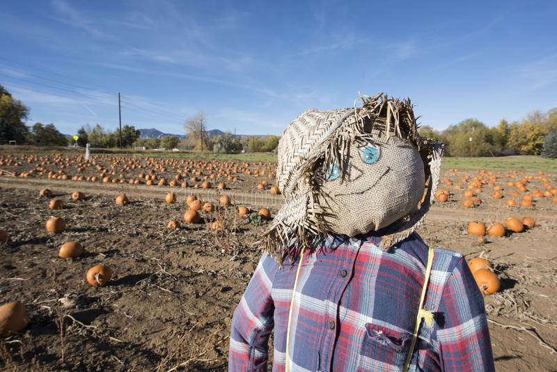 Download Scarecrow In The Pumpkin Patch Stock Image - Image: 79642873