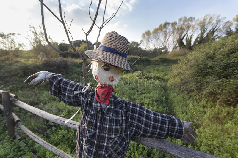 Scarecrow in a vegetable garden in a countryside. In europe royalty free stock photo