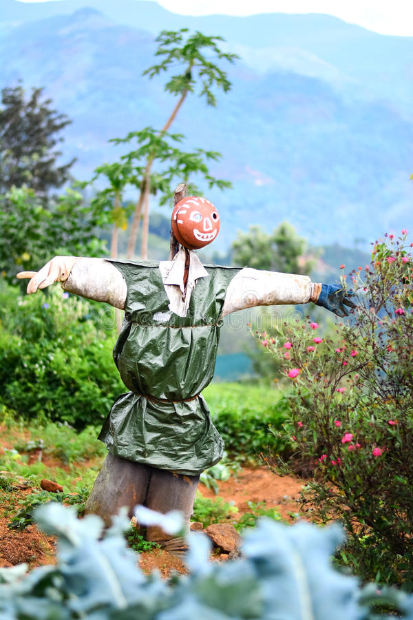 Scarecrow In A Vegetable Garden In Sri Lanka. Scarecrow Is A Decoy In The Shape Of A Human & Placed In Open Fields To Discourage Birds From Disturbing & stock image