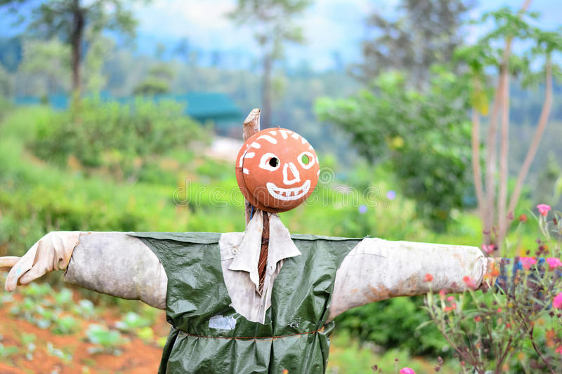 Scarecrow In A Vegetable Garden In Sri Lanka. Scarecrow Is A Decoy In The Shape Of A Human & Placed In Open Fields To Discourage Birds From Disturbing & stock photography
