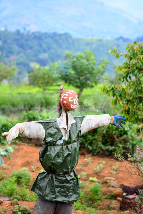 Scarecrow In A Vegetable Garden In Sri Lanka. Scarecrow Is A Decoy In The Shape Of A Human & Placed In Open Fields To Discourage Birds From Disturbing & stock images
