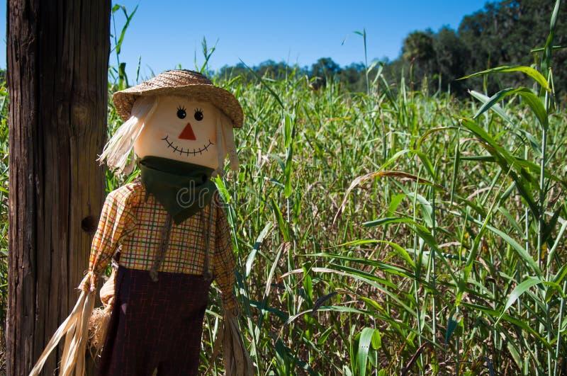 Scarecrow vid en havremaze arkivbild