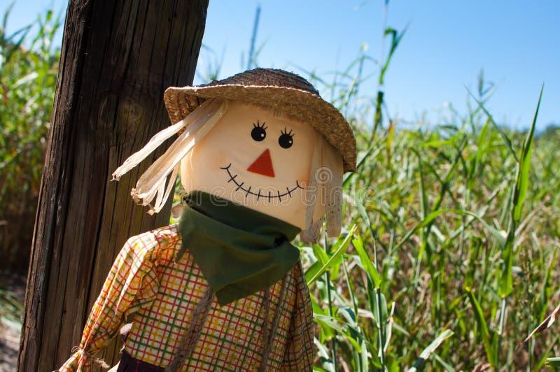 Scarecrow vid en havremaze royaltyfria foton