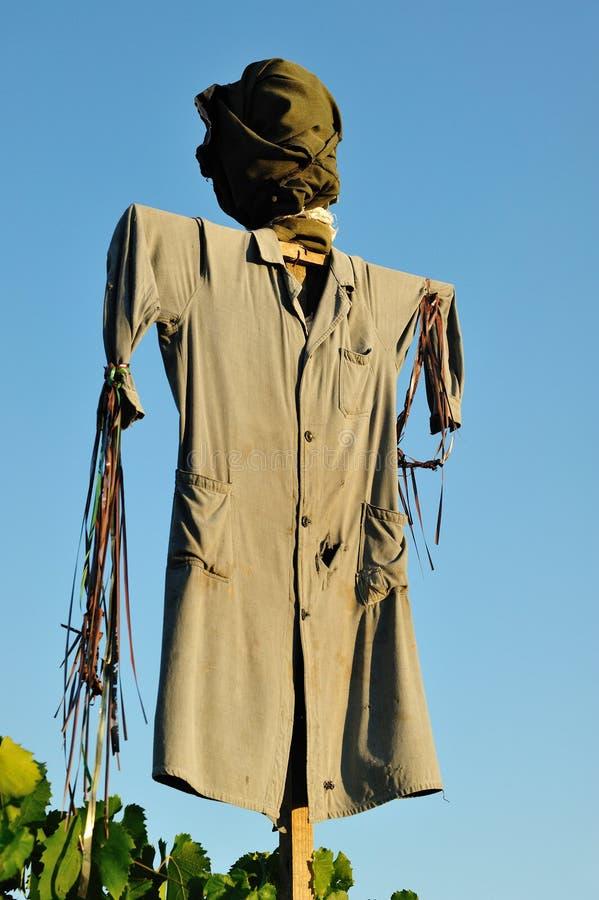 scarecrowvingård royaltyfri bild