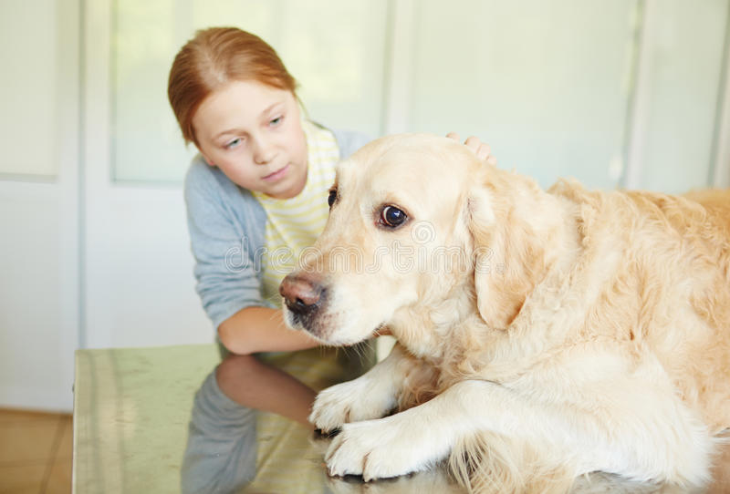 Scared animal in clinic. Red-haired girl petting and soothing her scared dog lying on table in vet clinic before treatment royalty free stock images