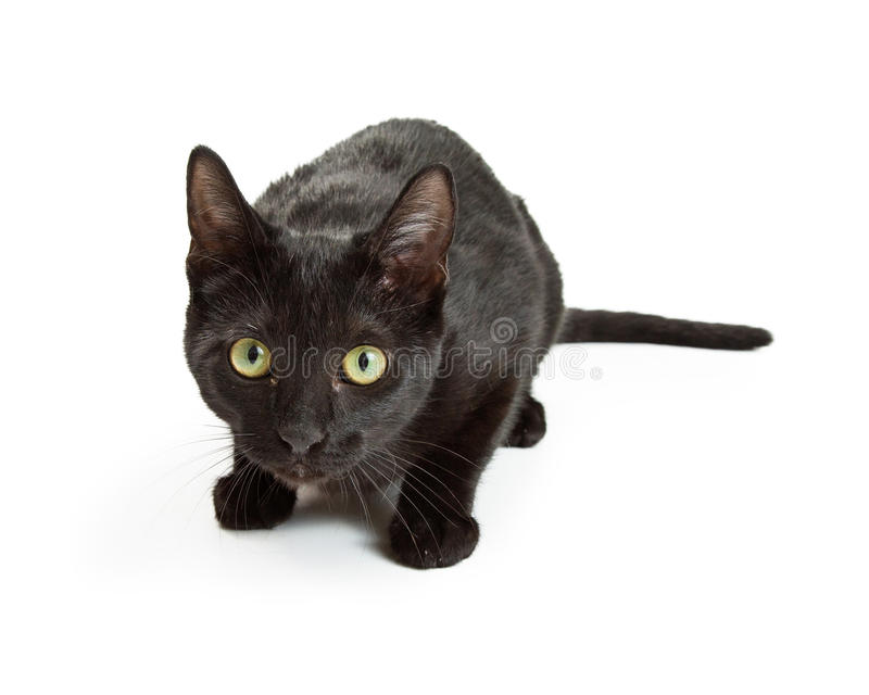 Scared Black Cat Cowering Looking Forward. Timid and scared young black cat crouching and looking forward stock photo
