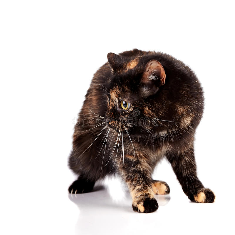 Free Scared Cat Stock Photo - 28539960