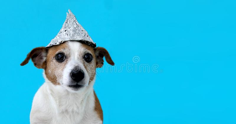 Scared dog in a foil hat royalty free stock photos