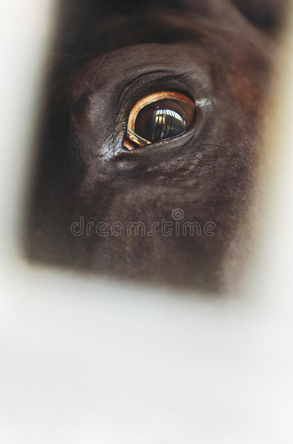 Scared horse eye with bars reflection. Closeup of a scared horse eye with reflections of enclosure bars. Shallow depth of field royalty free stock photo