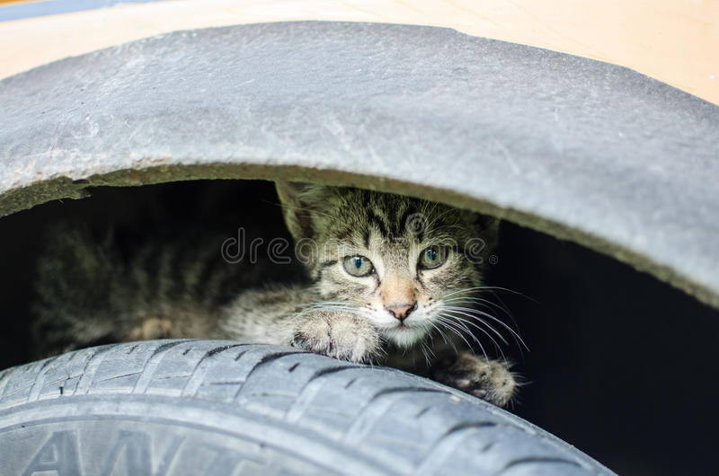 Scared little cat. Unknown visitor arrived in the backyard and scared little cat, which runaway into safety between car tyre and mudguard stock photos