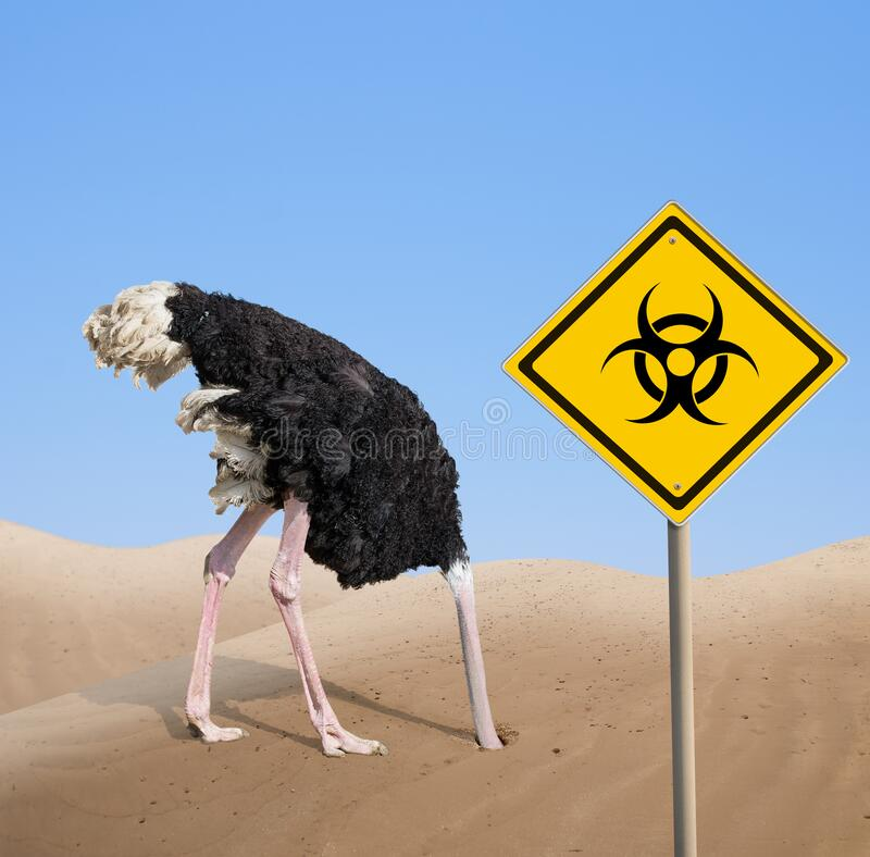 Scared ostrich with head in sand near warning quarantine bio hazard signboard. stock images