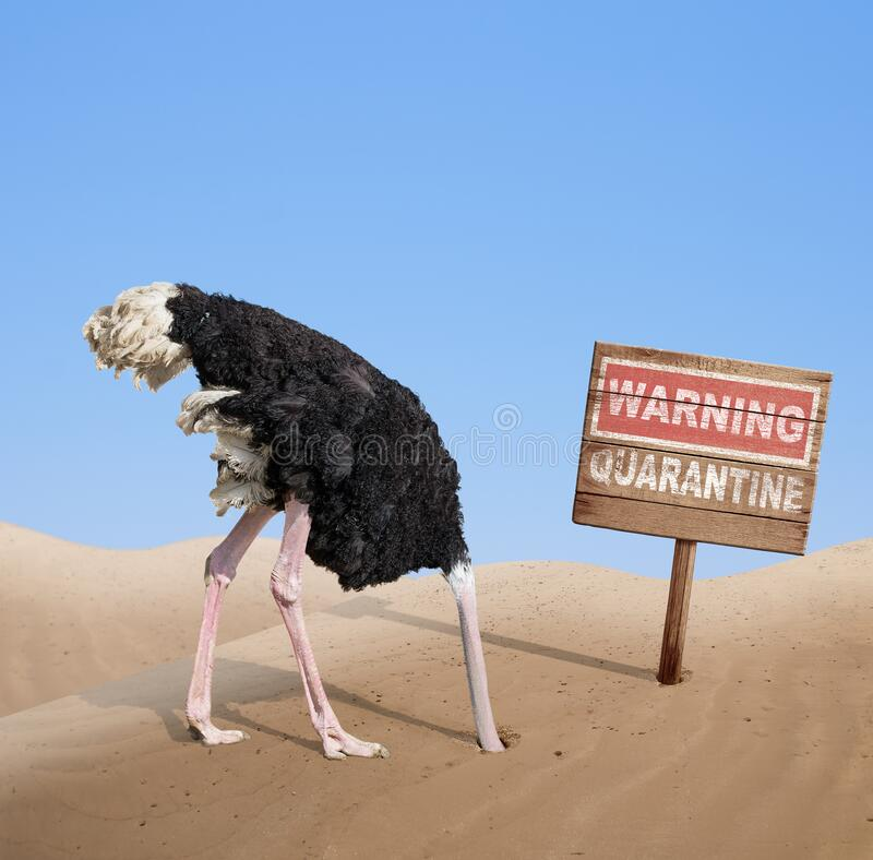 Free Scared Ostrich With Head In Sand Near Warning Quarantine Wooden Signboard. Stock Photos - 175363233