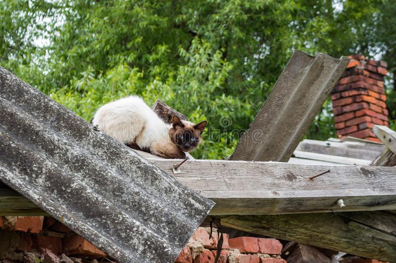 Scared cat sitting on the roof royalty free stock image