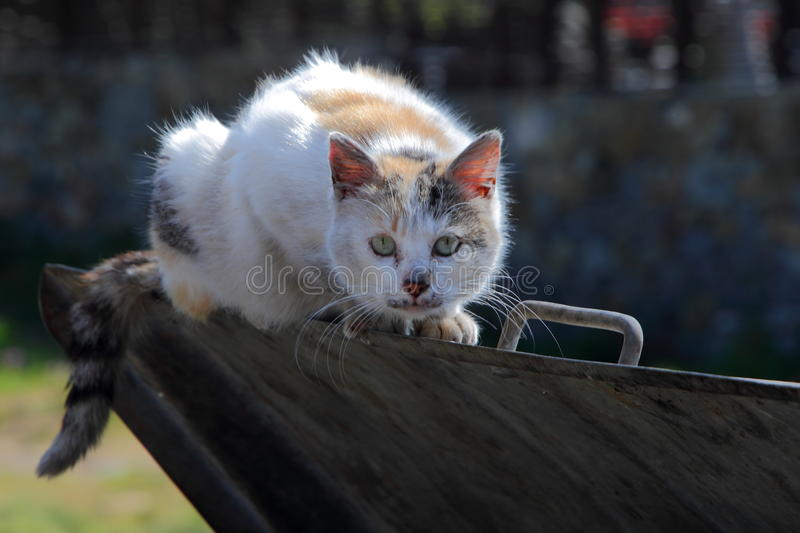 Scared Street Cat Royalty Free Stock Photo