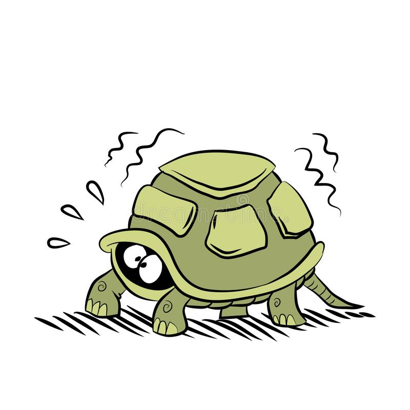 Hiding Turtle Stock Illustrations 38 Hiding Turtle Stock