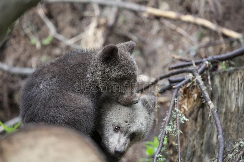 Let`s cuddle royalty free stock photo
