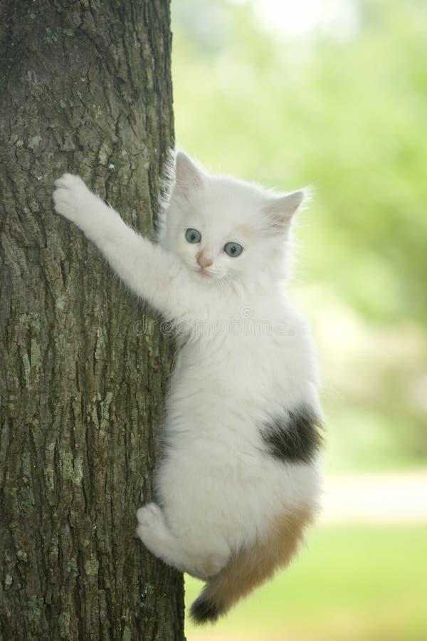 Scared white kitten in tree royalty free stock photos