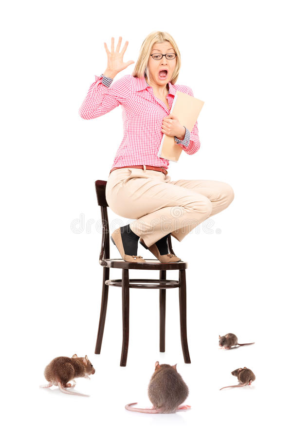 Download Scared Woman Standing On Chair During A Rat Invasion Stock Image - Image: 37968939
