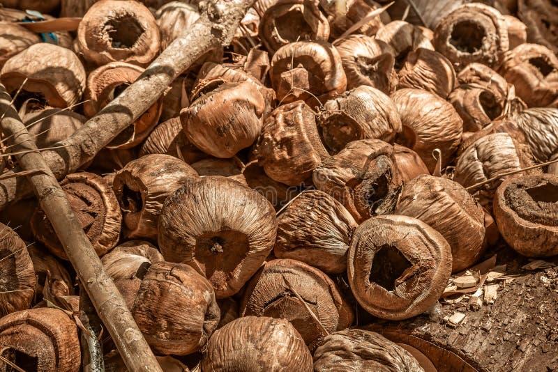 Scarichi le vecchie noci di cocco asciutte, la coda per bruciare Riciclaggio dell'immondizia organica Primo piano, toni marroni S immagine stock