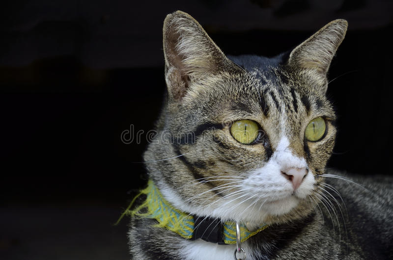 Scaring cat. (Cat in thailand) royalty free stock photos
