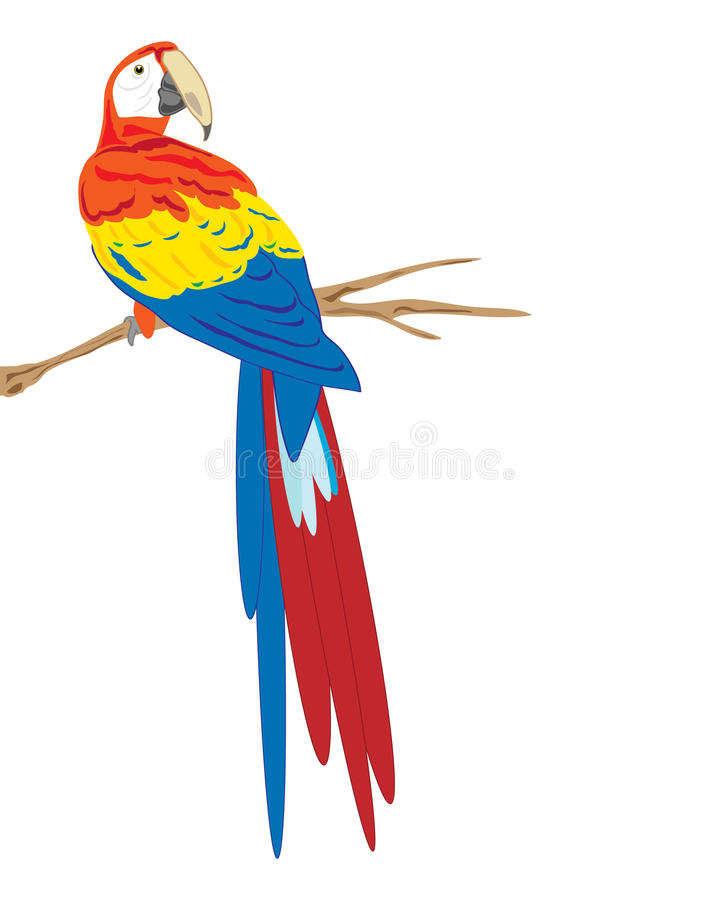 Scarlet macaw royalty free illustration