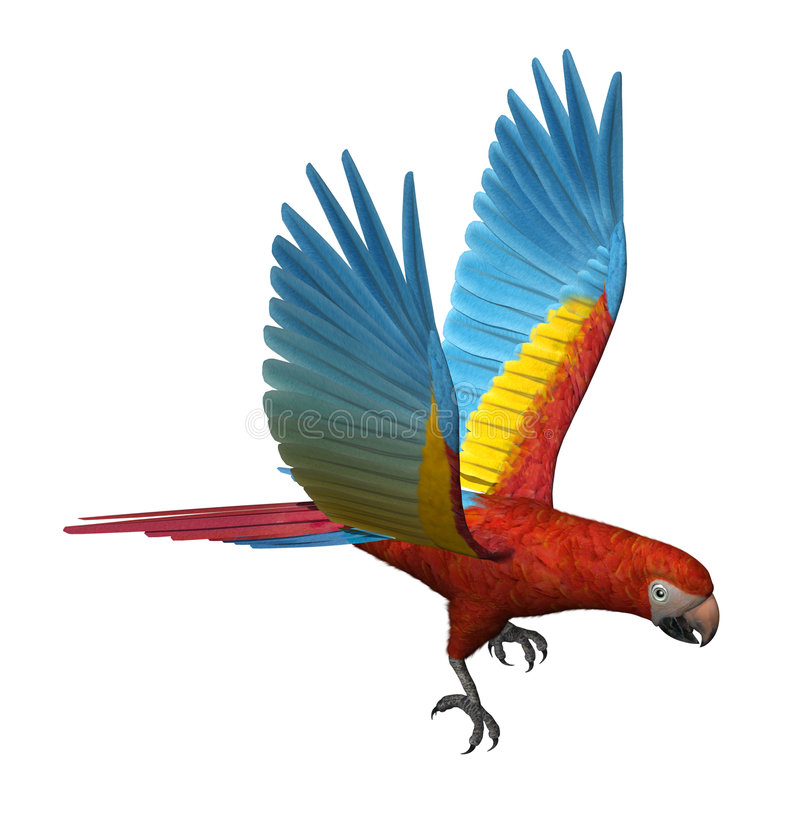 Scarlet Macaw Flying stock illustration