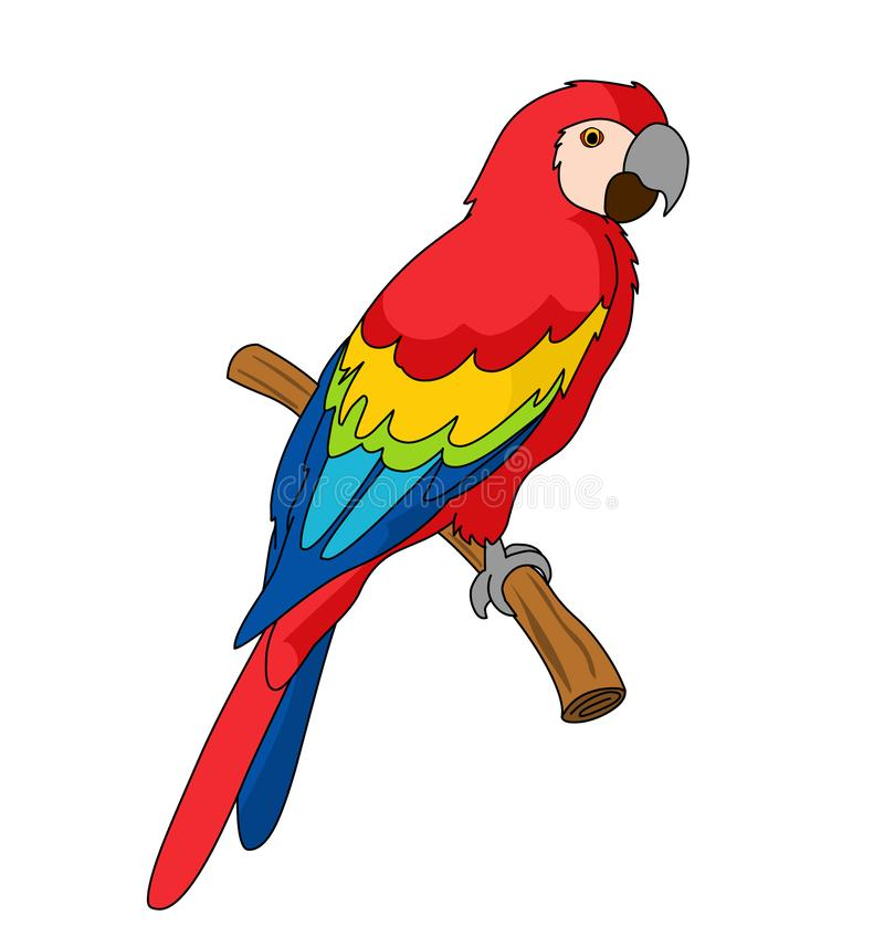 Scarlet Macaw illustration vector stock illustration
