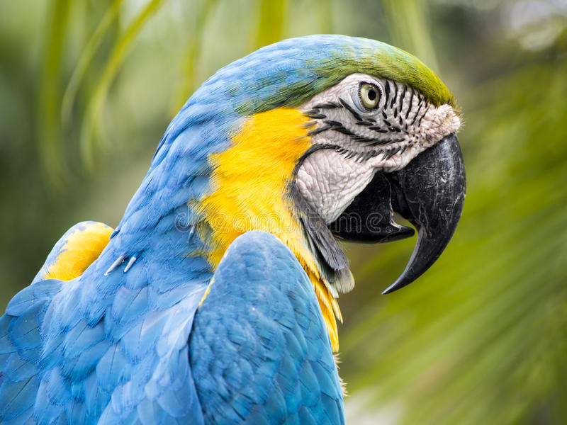 Download Scarlet macaw stock photo. Image of paradise, parrot - 33774206