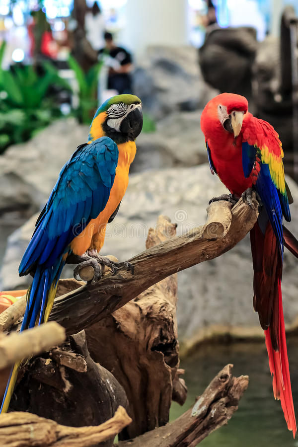 Download Scarlet macaws stock image. Image of colorful, plant - 27668787