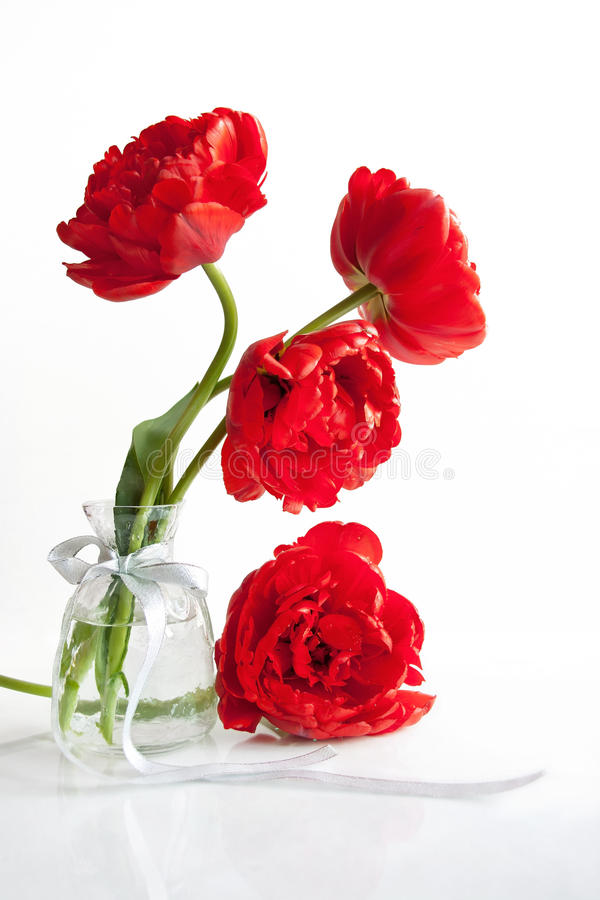 Scarlet tulips. In a vase with silver ribbon royalty free stock photo