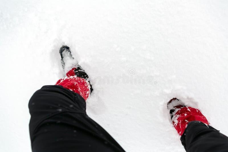 Scarpe della neve su una neve bianca durante l'escursione nell'inverno immagine stock libera da diritti