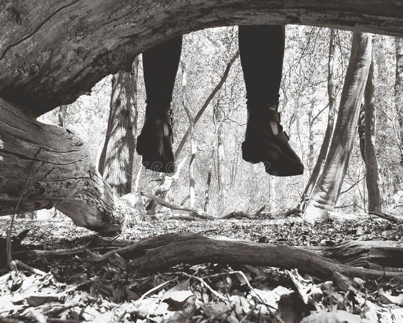 Scarpe in una foresta fotografia stock libera da diritti