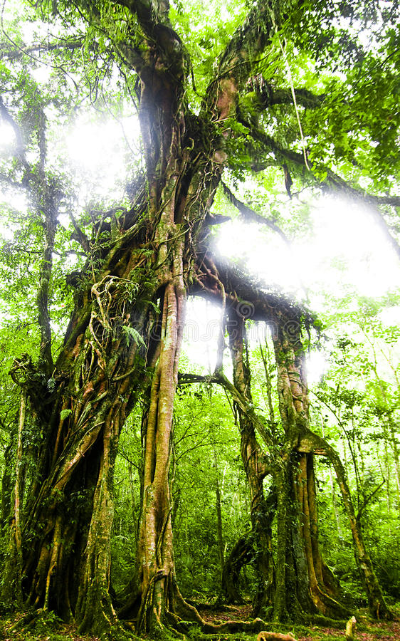 scary δέντρο στοκ εικόνα με δικαίωμα ελεύθερης χρήσης
