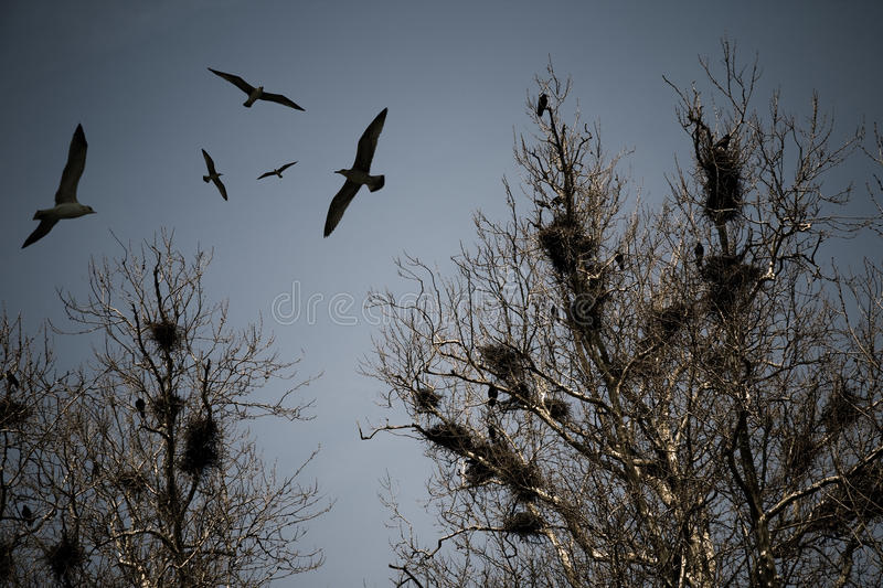 Scary crows. Flying and resting on tree royalty free stock image