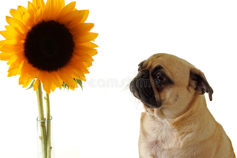 Scary Flower royalty free stock photography