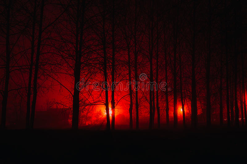 Scary foggy forest royalty free stock photo
