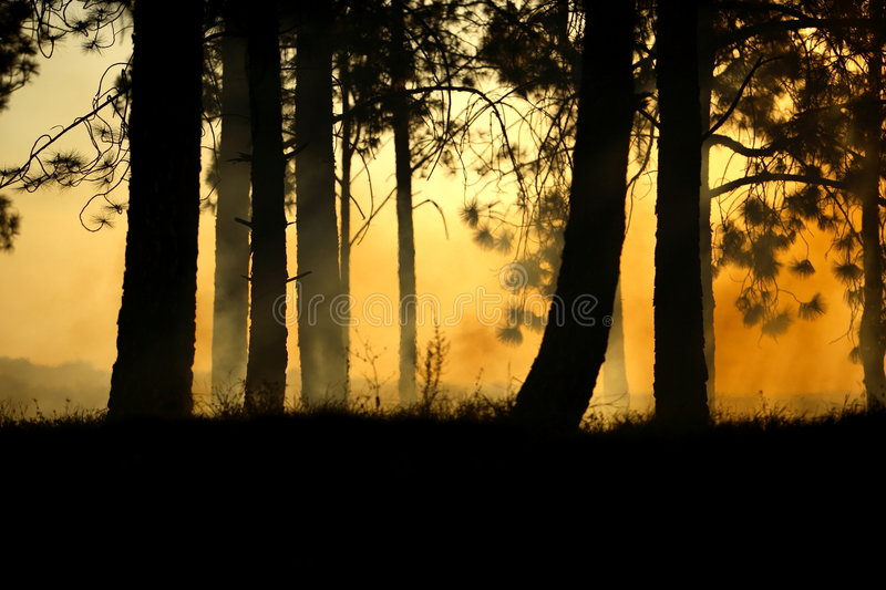 Scary Forest stock photography