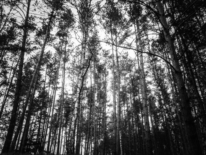Scary forest black and white stock photo