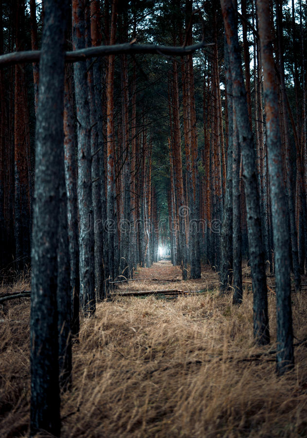 Scary Forest At Evening With Light In The End Stock Photo ...