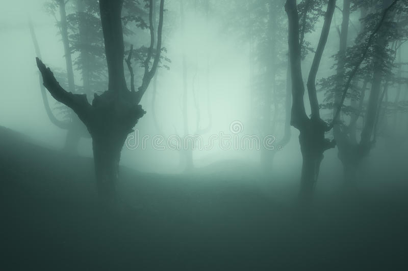 Scary forest with mood stock photo