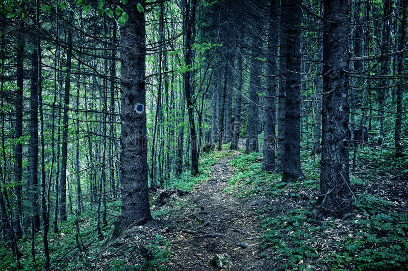 Download Scary Forest At Night Stock Photo - Image: 41071286