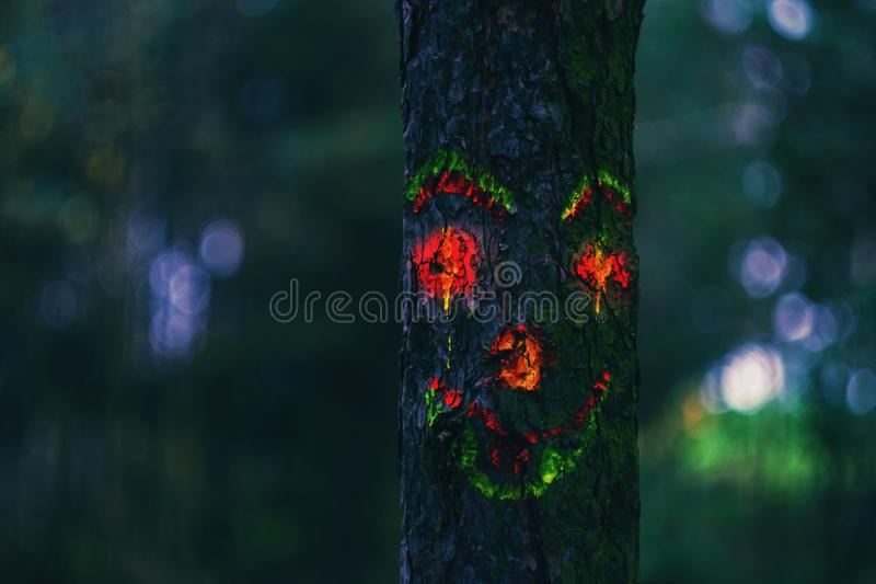 Scary forrest royalty free stock images