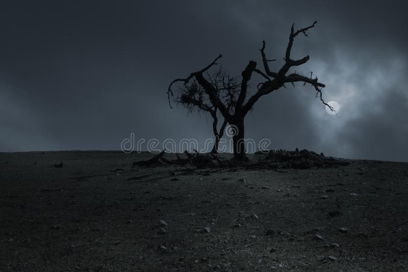 Scary halloween background with dead tree at night. Spooky halloween background with dead tree in a full moon night stock images