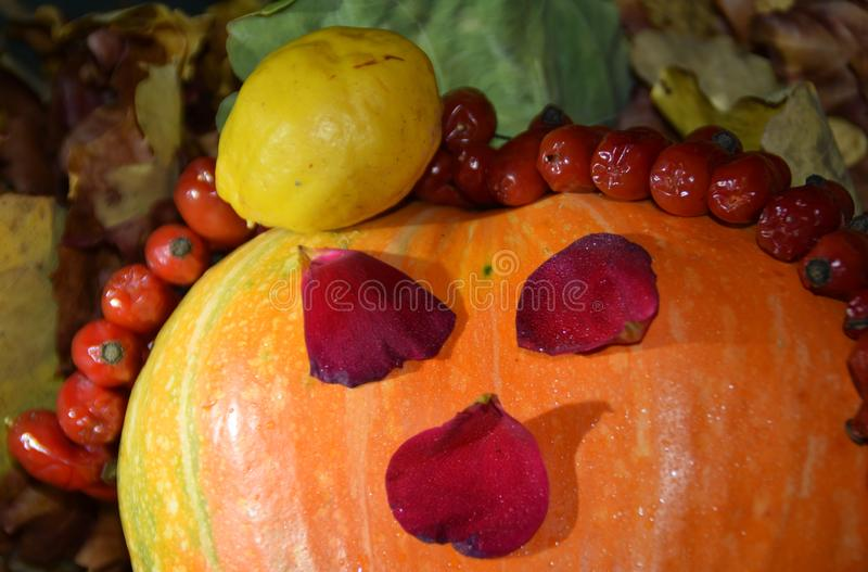 Scary Halloween face from autumn harvest. Scary Halloween face from autumn harvest - orange pumpkin, yellow quince, rose petals and dog-rose fruits. Latvia royalty free stock images