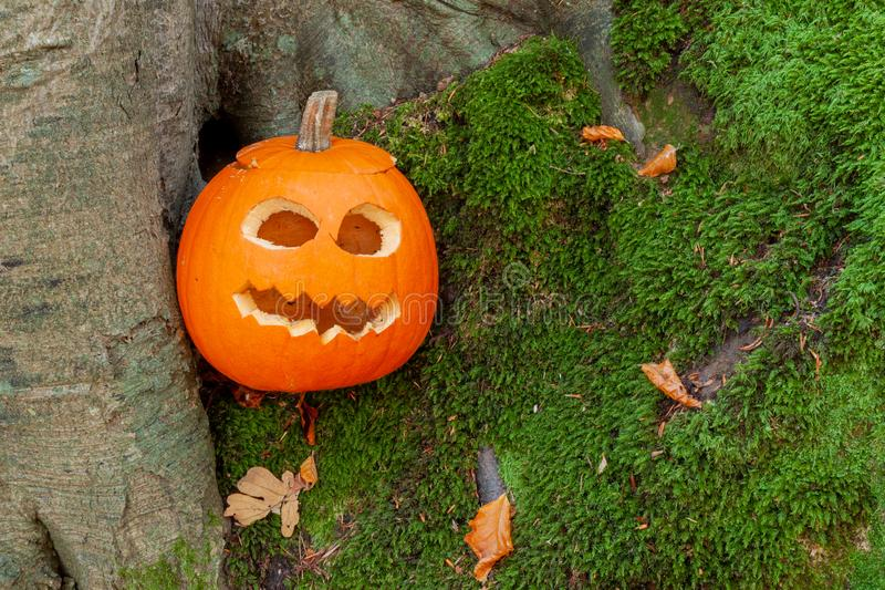 Scary halloween pumpkin in the woods. Pumpkin with cutout scary face in teh forest for hlloween stock images