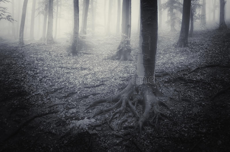 Scary horror forest with fog and mist. Dark scary horror forest with fog and mist stock photo