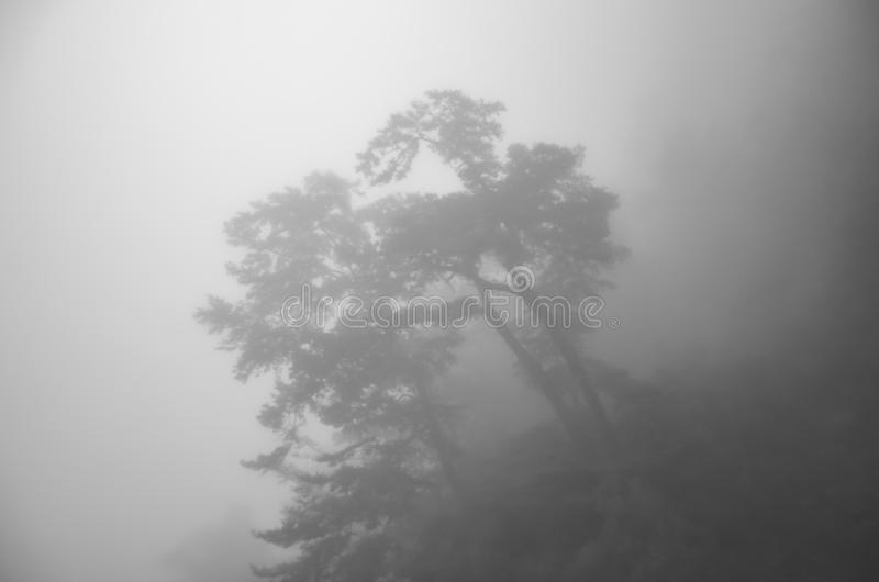 Scary horror tree in dark foggy forest. Horror, mysterious, fantasy atmosphere. Misty landscape, moody. Halloween background. Black and white photography stock photography