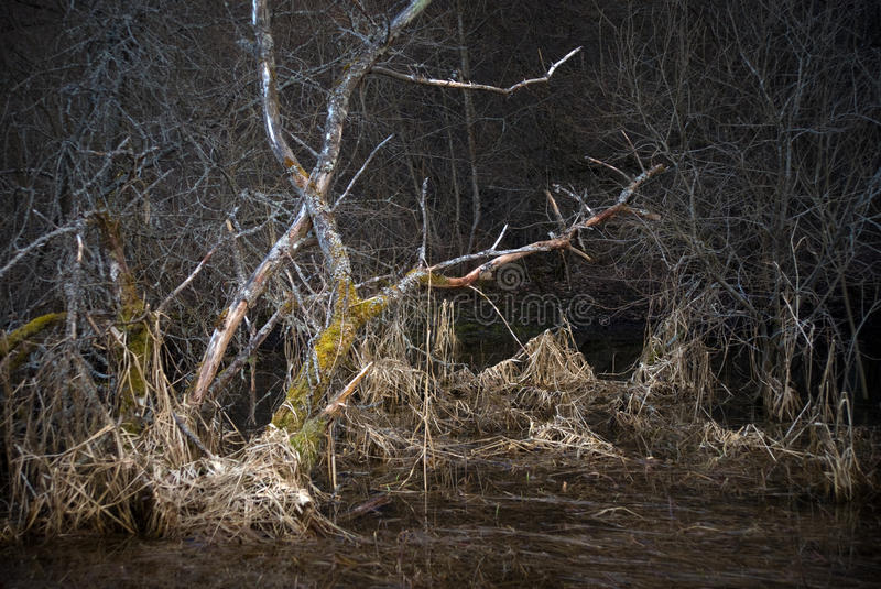 Download Scary Landscape With Dead Tree Stock Image - Image: 13934807