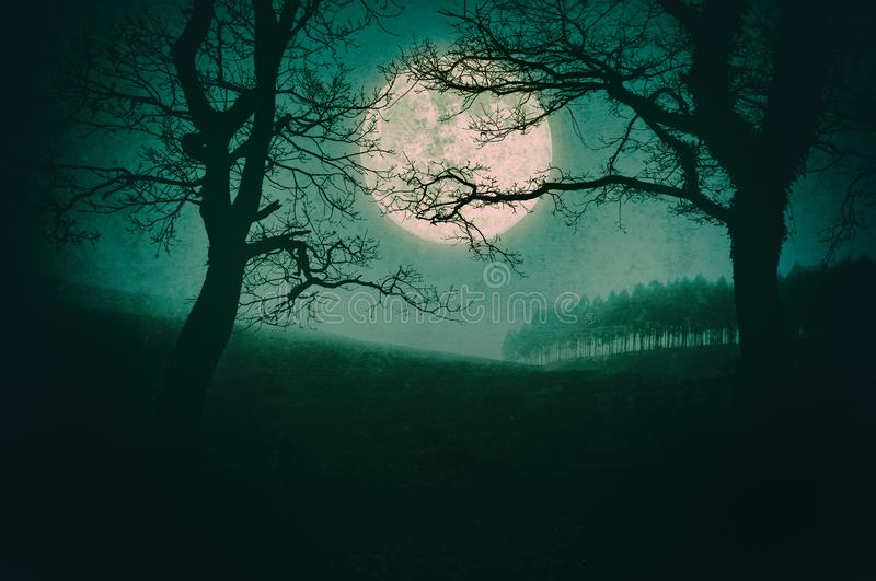 Scary landscape at night with trees and full moon. Scary landscape at night with trees and a full moon stock images