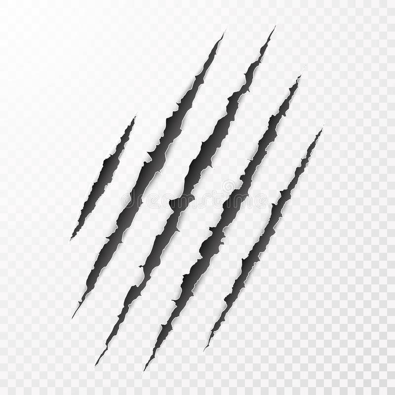 Scary leceration paper surface. Wild animal claws scratch texture. Torn paper edge. vector illustration royalty free illustration